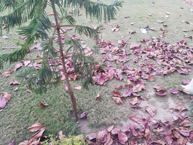 Autumn Beauty Autumn Pictures