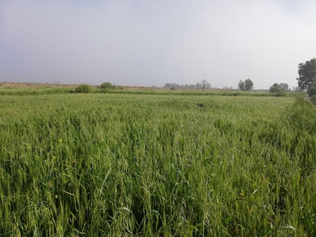 green land Image